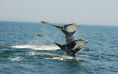 Whale Watching Bay of Fundy New Brunswick Canada